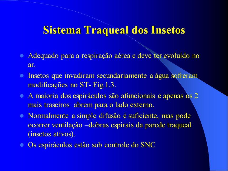 Sistema Traqueal dos Insetos