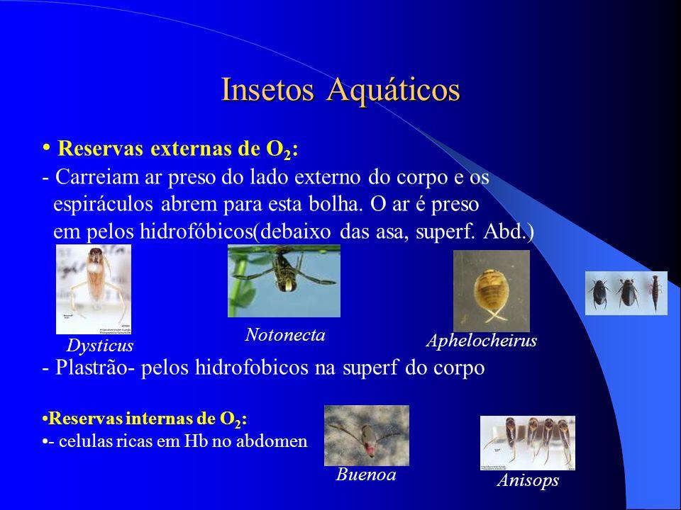 Insetos Aquáticos Reservas externas de O2: