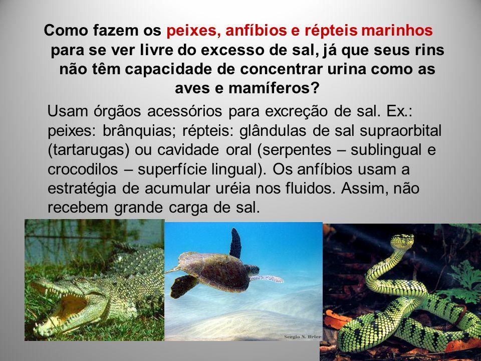 Como fazem os peixes, anfíbios e répteis marinhos para se ver livre do excesso de sal, já que seus rins não têm capacidade de concentrar urina como as aves e mamíferos