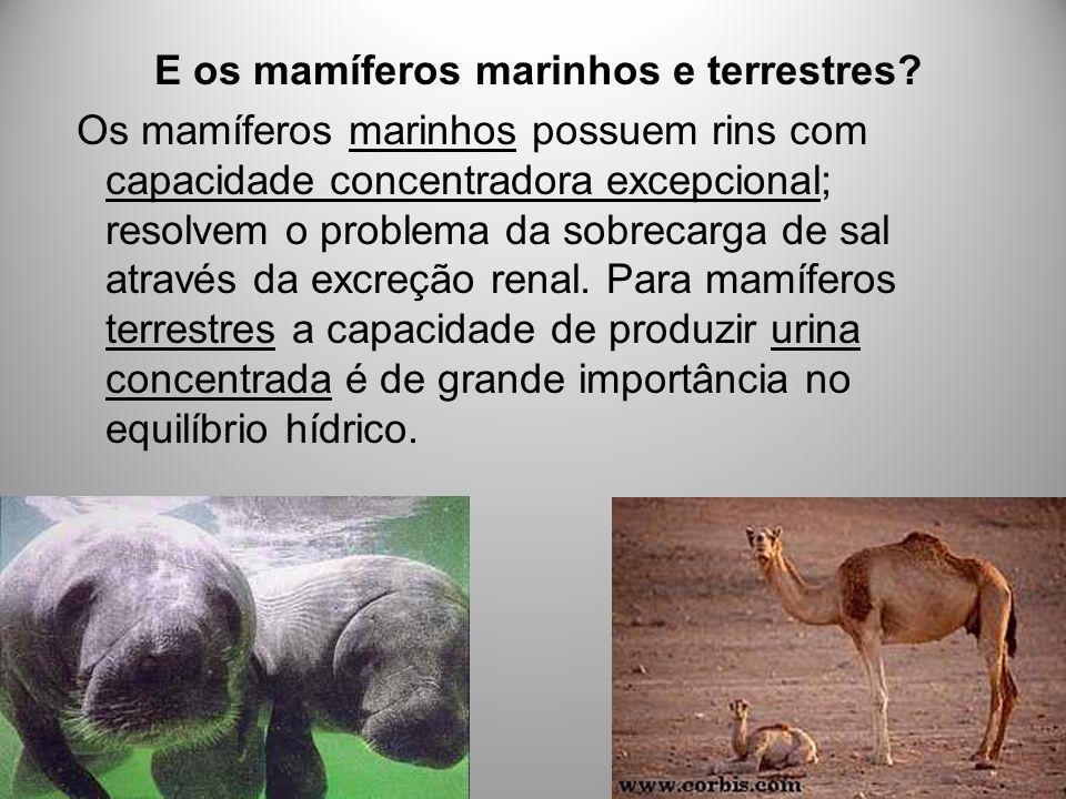 E os mamíferos marinhos e terrestres