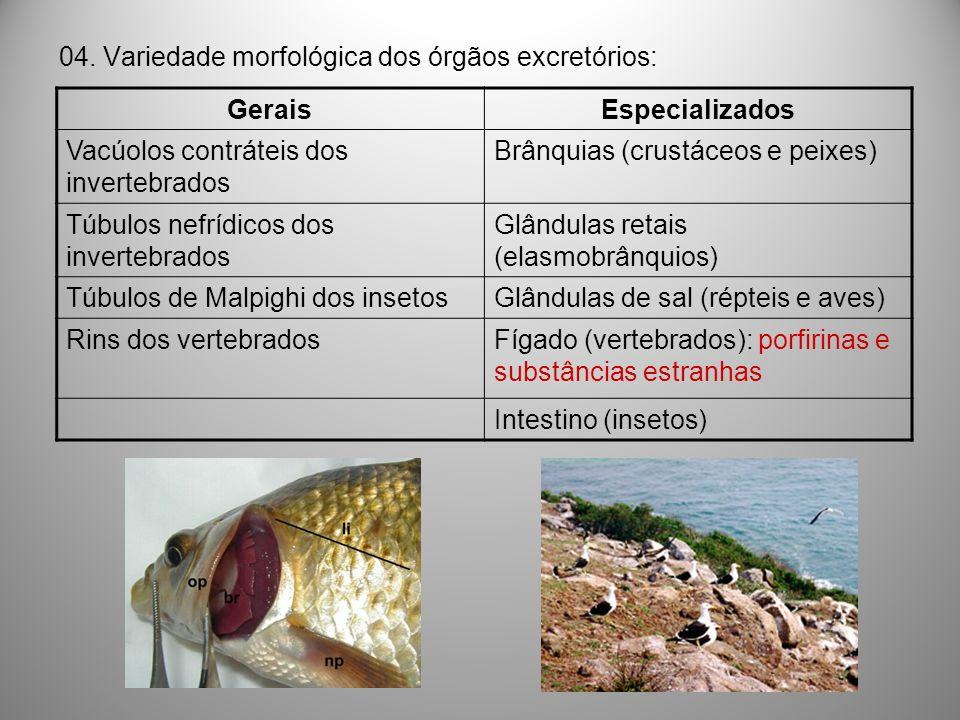 04. Variedade morfológica dos órgãos excretórios: