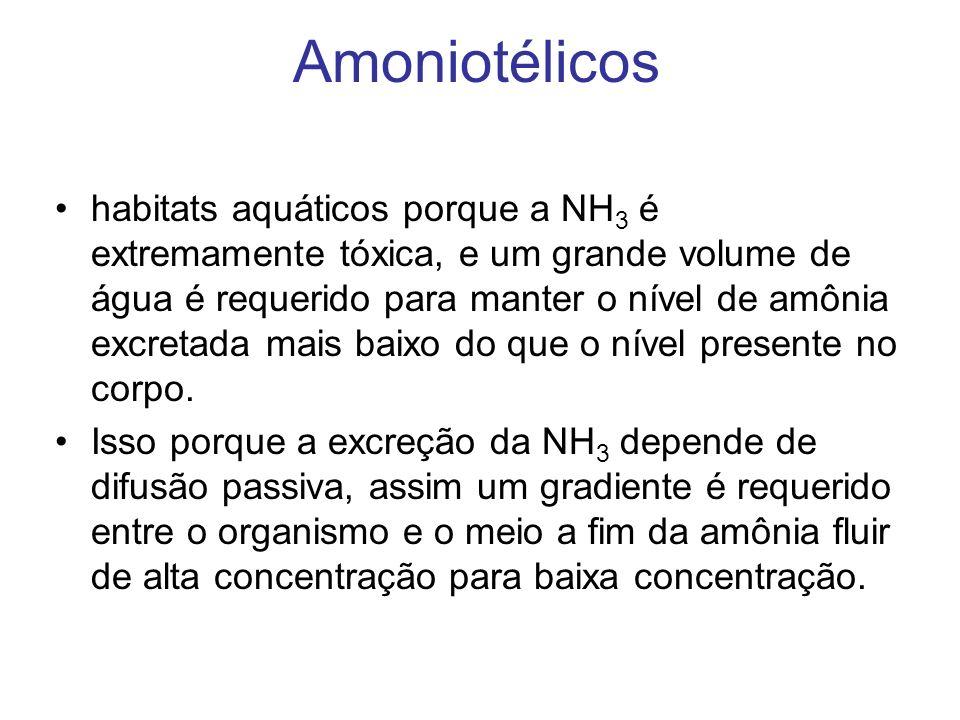 Amoniotélicos