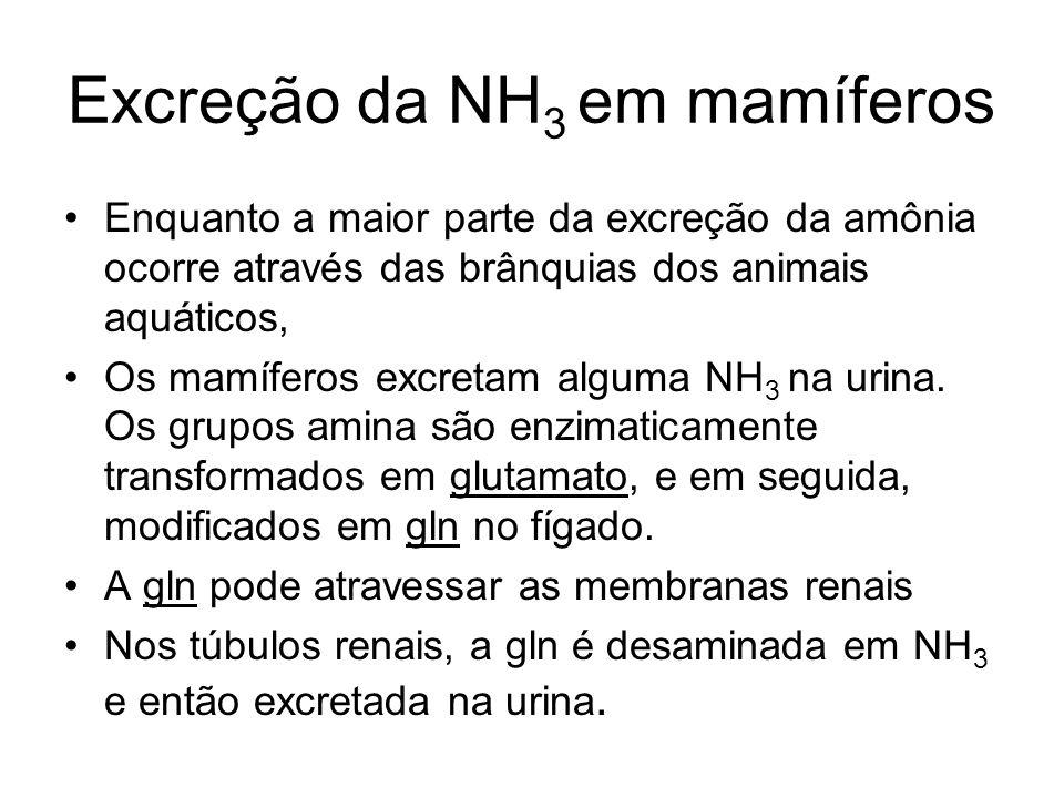 Excreção da NH3 em mamíferos