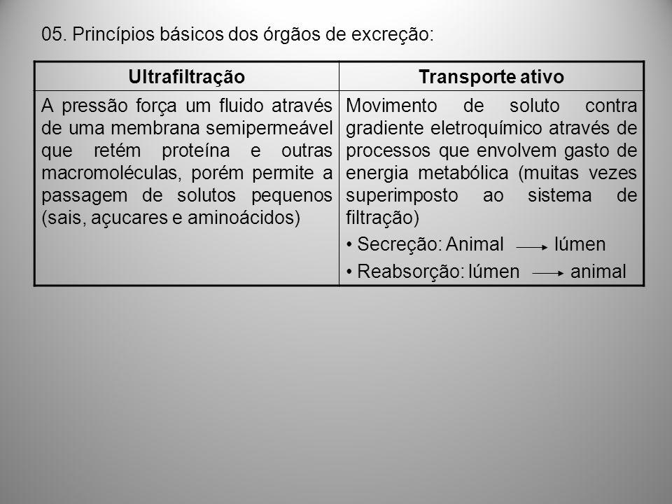 05. Princípios básicos dos órgãos de excreção: