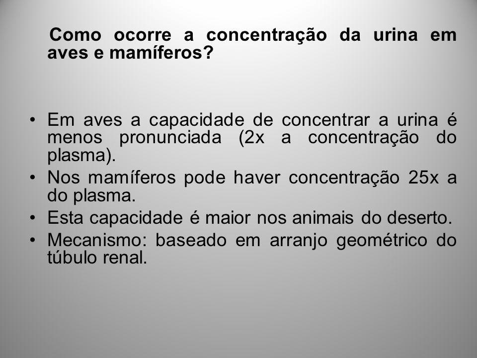 Como ocorre a concentração da urina em aves e mamíferos