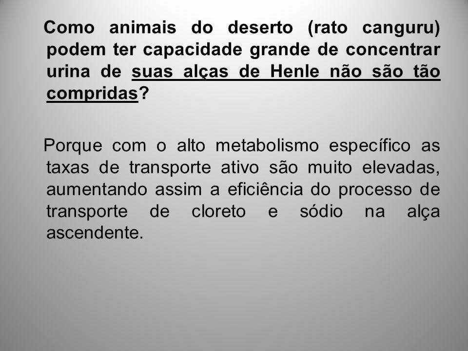 Como animais do deserto (rato canguru) podem ter capacidade grande de concentrar urina de suas alças de Henle não são tão compridas