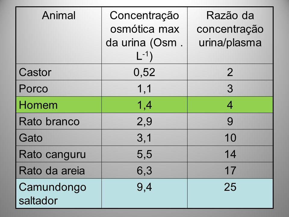 Concentração osmótica max da urina (Osm . L-1)