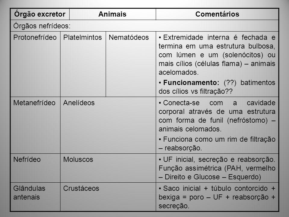 Órgão excretor Animais. Comentários. Órgãos nefrídeos: Protonefrídeo. Platelmintos. Nematódeos.