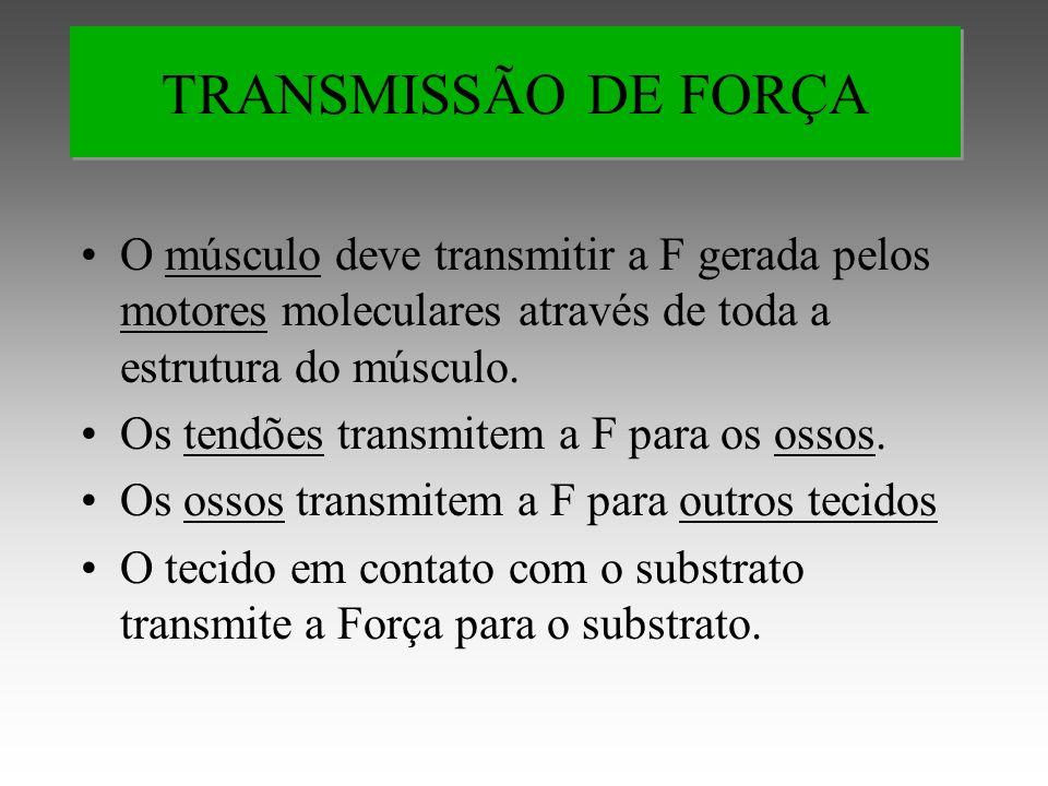 TRANSMISSÃO DE FORÇA O músculo deve transmitir a F gerada pelos motores moleculares através de toda a estrutura do músculo.