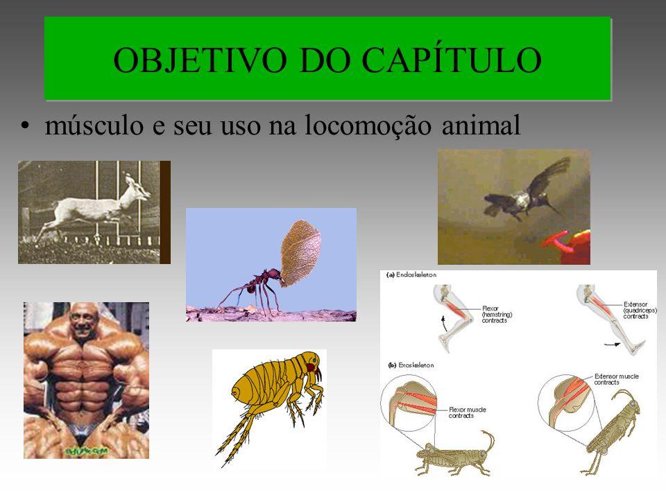 OBJETIVO DO CAPÍTULO músculo e seu uso na locomoção animal