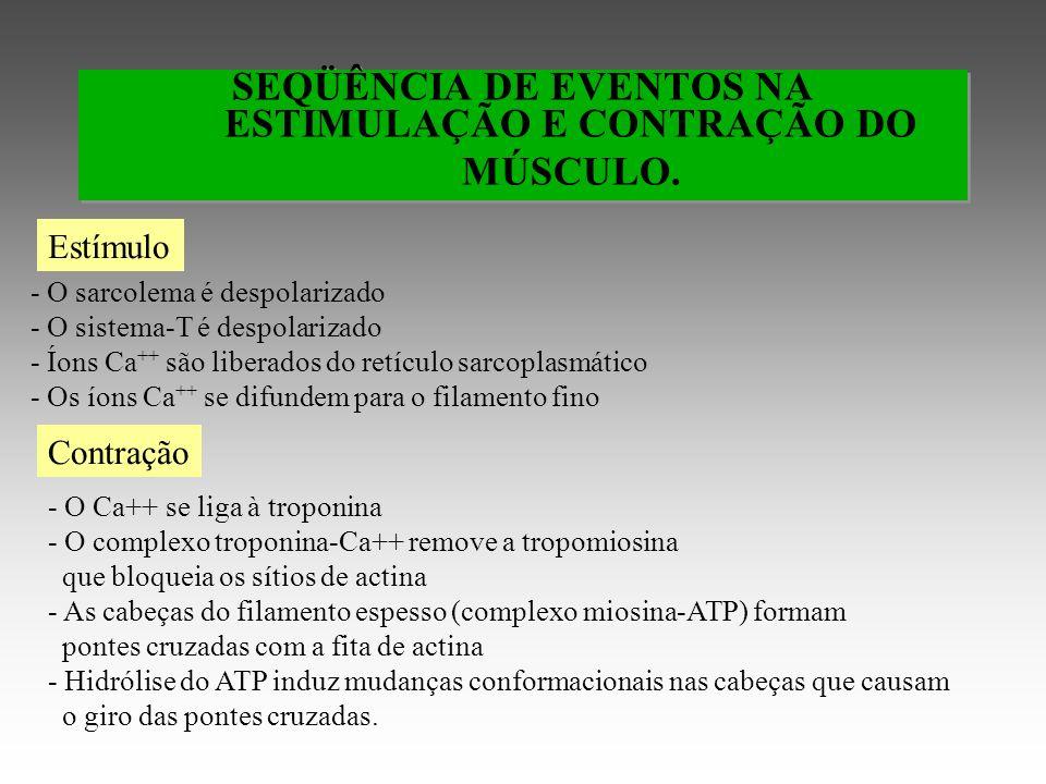 SEQÜÊNCIA DE EVENTOS NA ESTIMULAÇÃO E CONTRAÇÃO DO MÚSCULO.