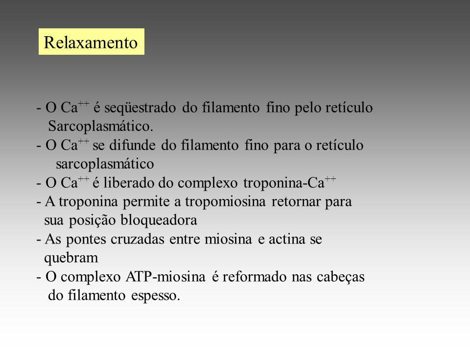 Relaxamento - O Ca++ é seqüestrado do filamento fino pelo retículo