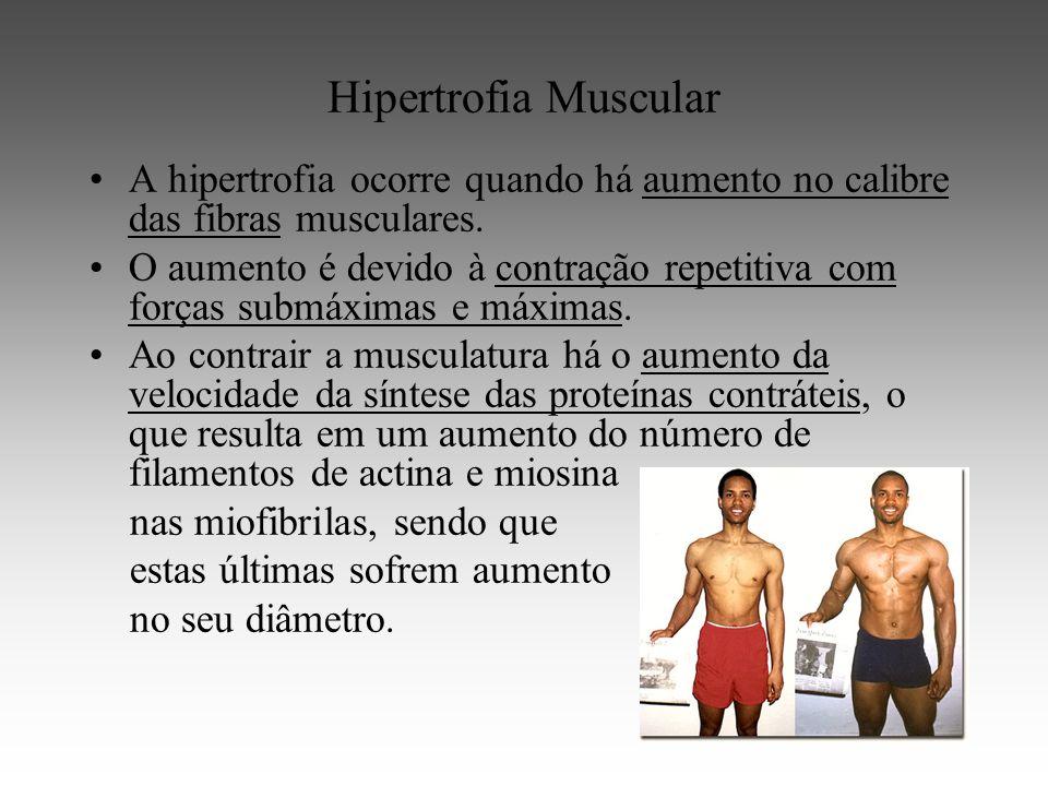 Hipertrofia Muscular A hipertrofia ocorre quando há aumento no calibre das fibras musculares.