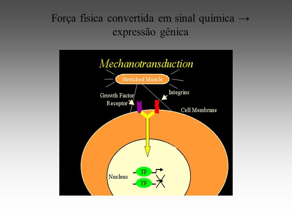 Força física convertida em sinal química → expressão gênica