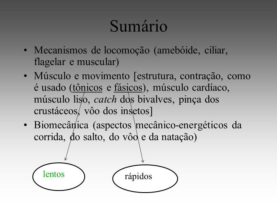 Sumário Mecanismos de locomoção (amebóide, ciliar, flagelar e muscular)