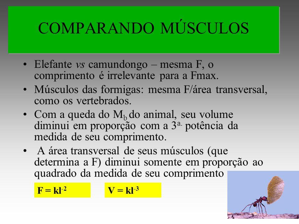 COMPARANDO MÚSCULOS Elefante vs camundongo – mesma F, o comprimento é irrelevante para a Fmax.