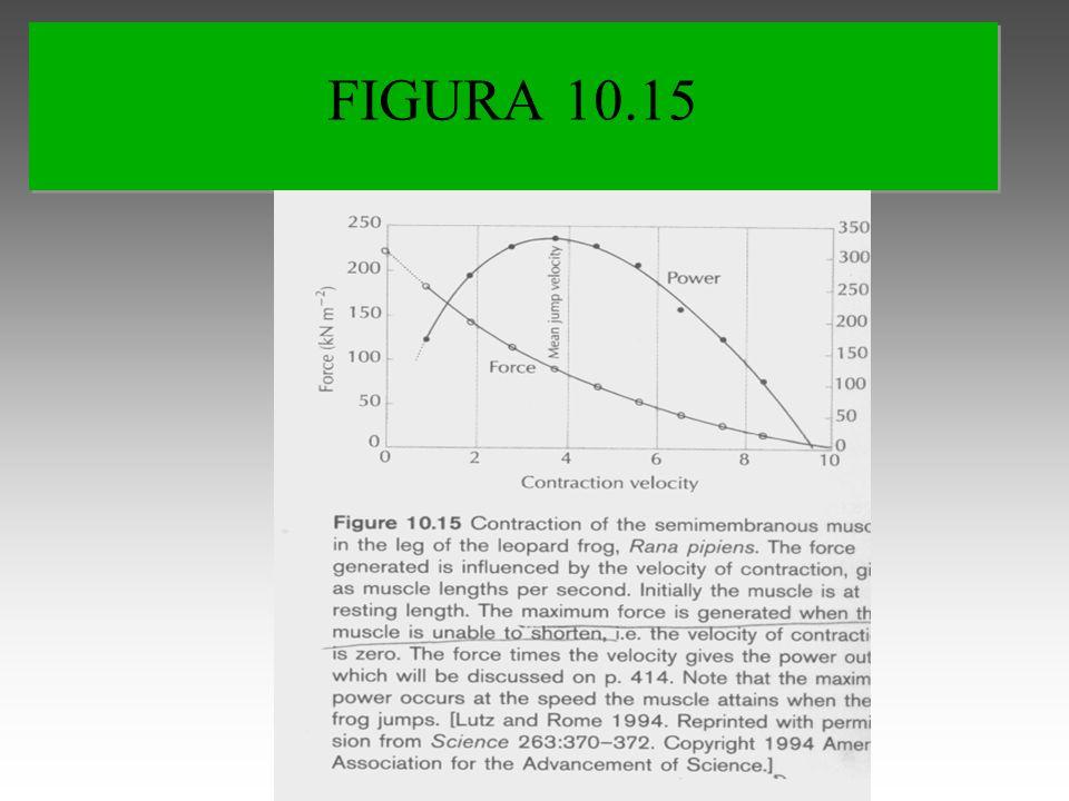 FIGURA 10.15