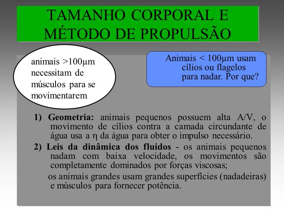 TAMANHO CORPORAL E MÉTODO DE PROPULSÃO