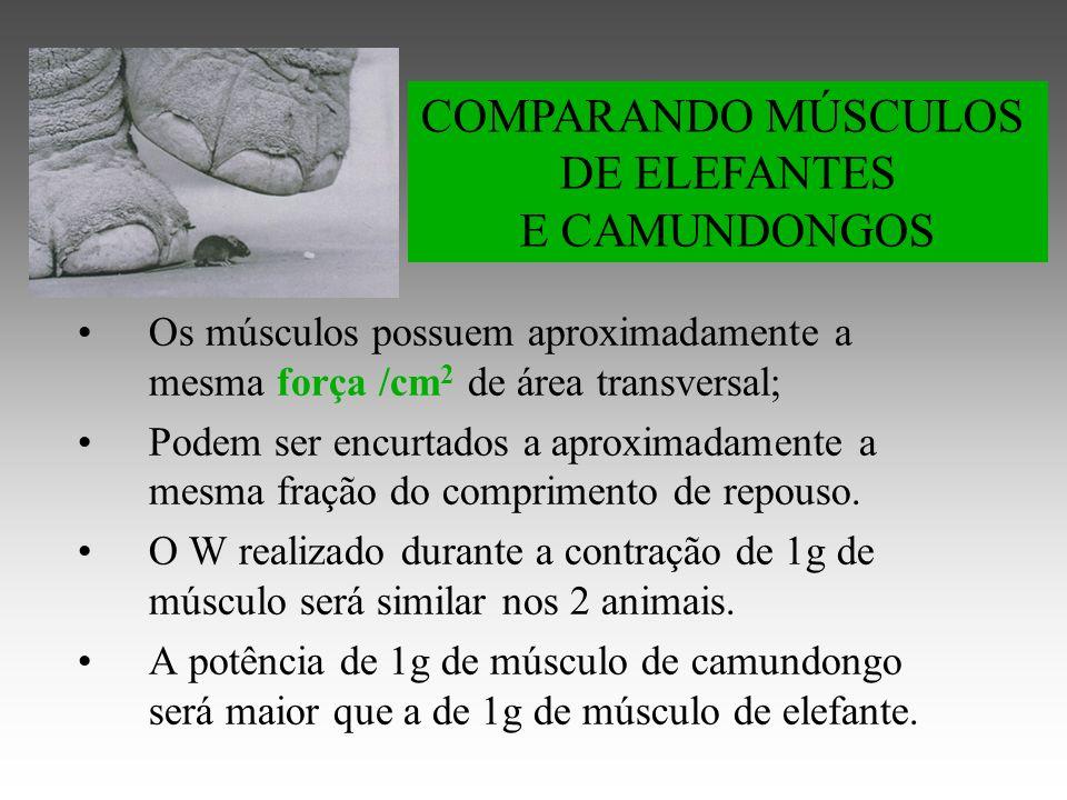 DE ELEFANTES E CAMUNDONGOS