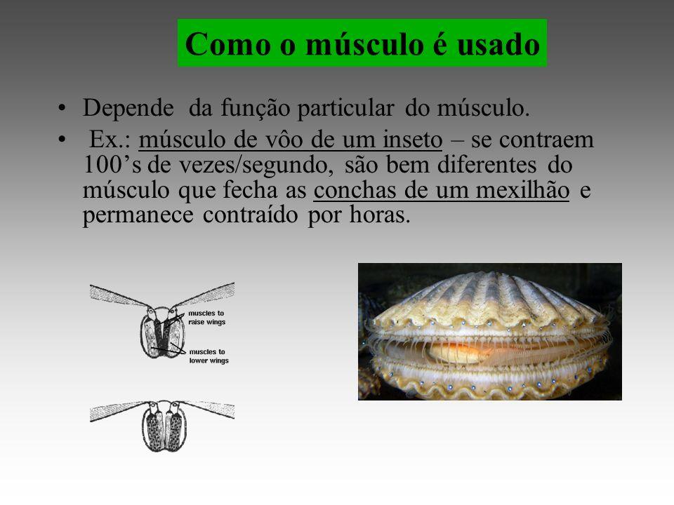 Como o músculo é usado Depende da função particular do músculo.