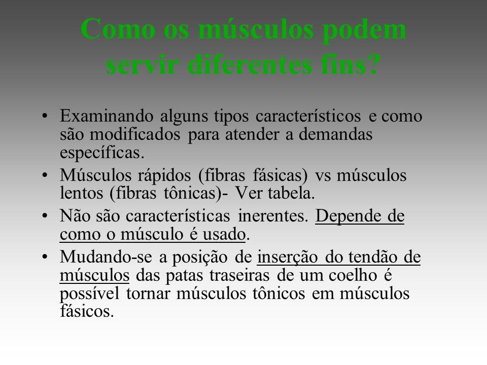 Como os músculos podem servir diferentes fins