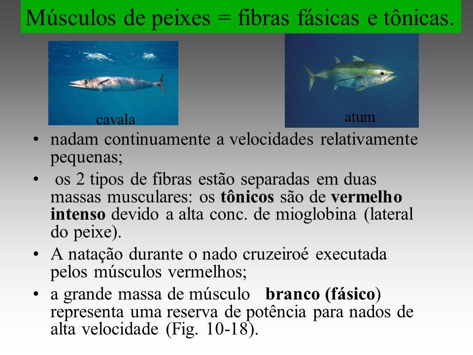 Músculos de peixes = fibras fásicas e tônicas.