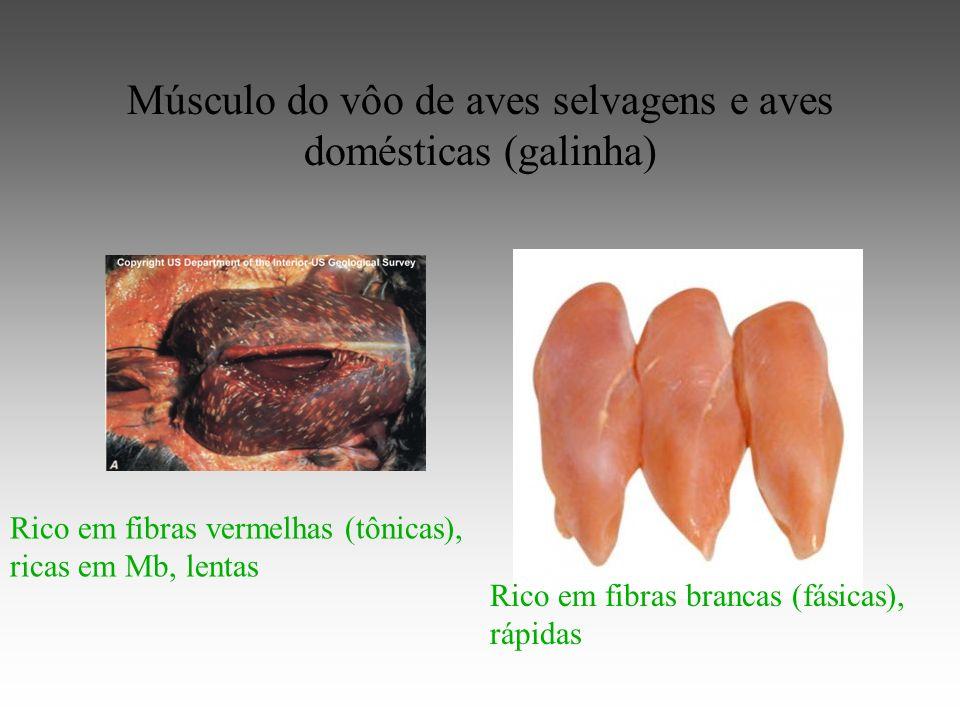 Músculo do vôo de aves selvagens e aves domésticas (galinha)