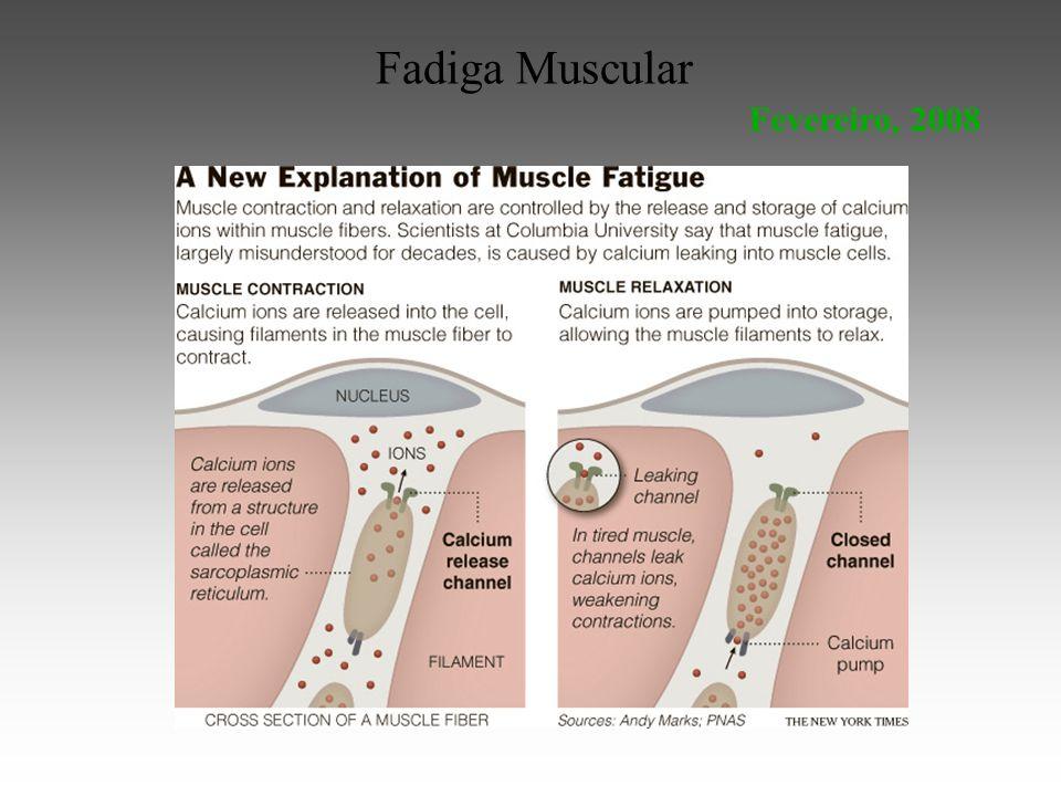 Fadiga Muscular Fevereiro, 2008