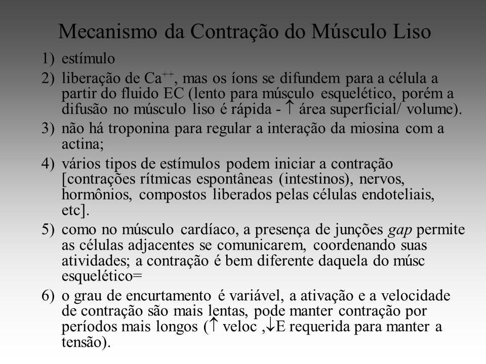 Mecanismo da Contração do Músculo Liso