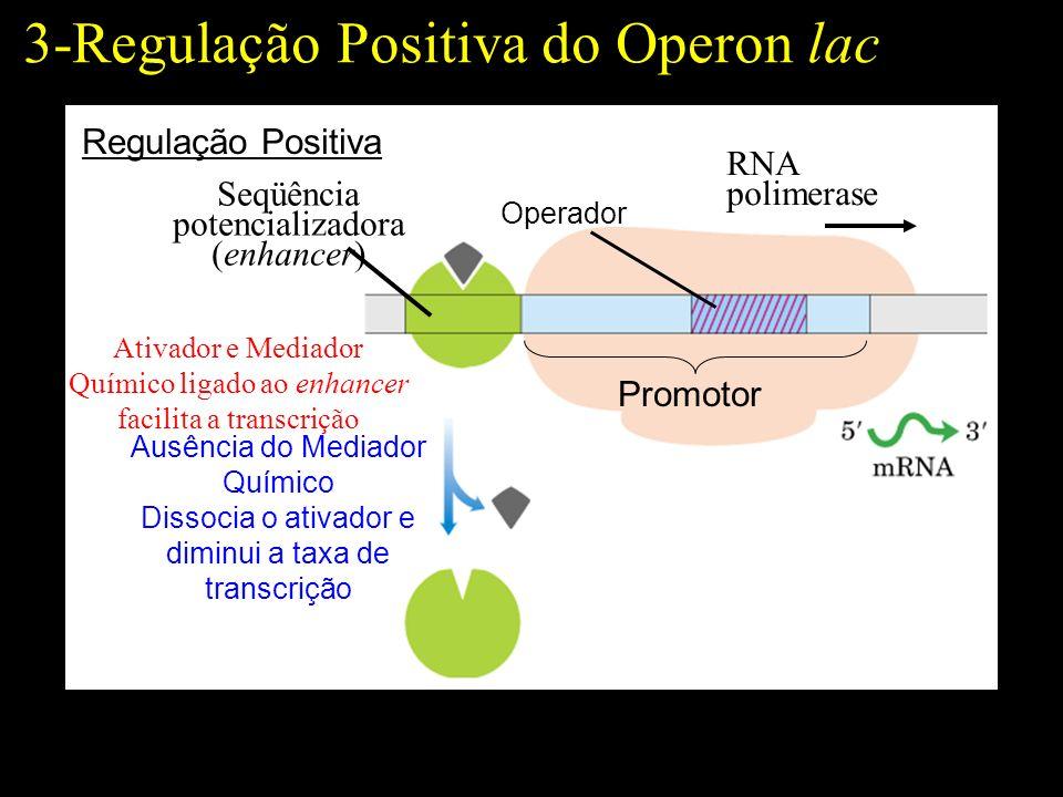 3-Regulação Positiva do Operon lac