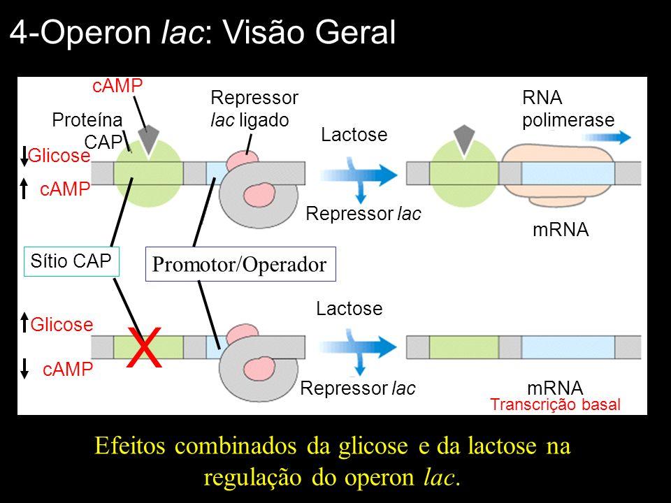 Efeitos combinados da glicose e da lactose na regulação do operon lac.