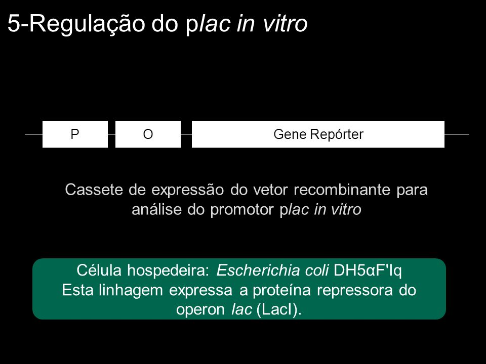 5-Regulação do plac in vitro