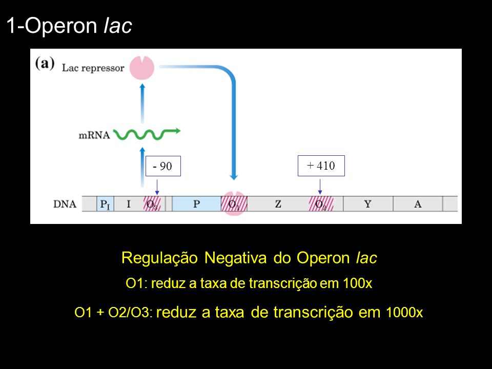 1-Operon lac Regulação Negativa do Operon lac