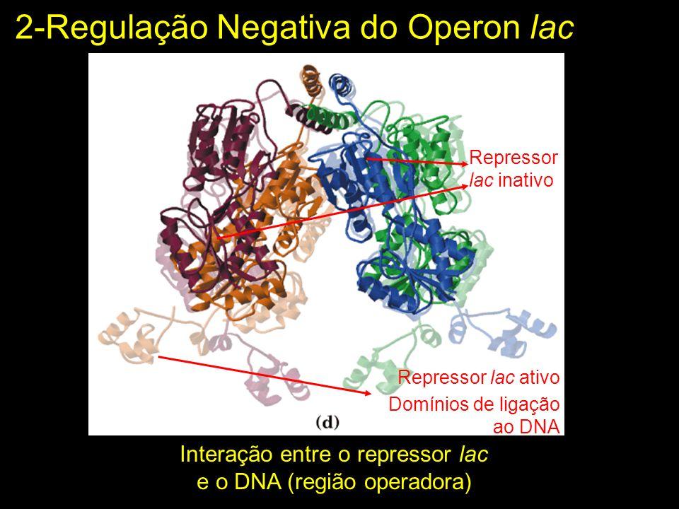 2-Regulação Negativa do Operon lac