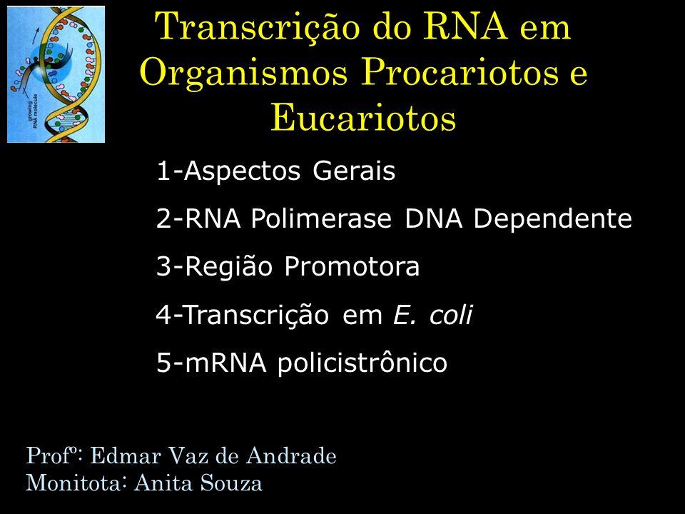 Transcrição do RNA em Organismos Procariotos e Eucariotos