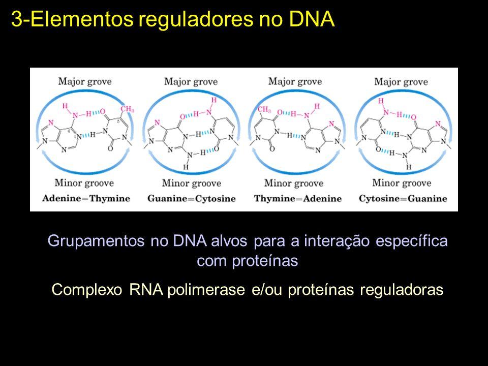 3-Elementos reguladores no DNA