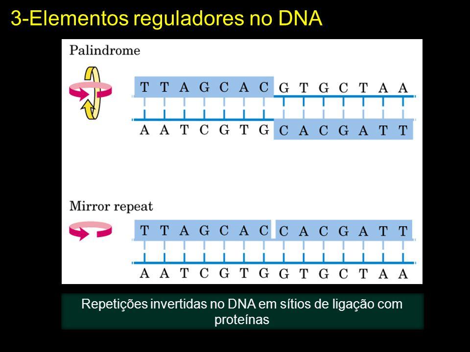 Repetições invertidas no DNA em sítios de ligação com proteínas