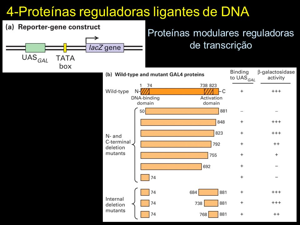 Proteínas modulares reguladoras de transcrição