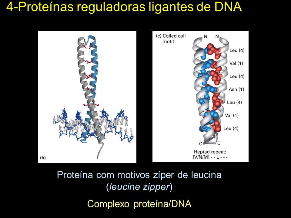 4-Proteínas reguladoras ligantes de DNA