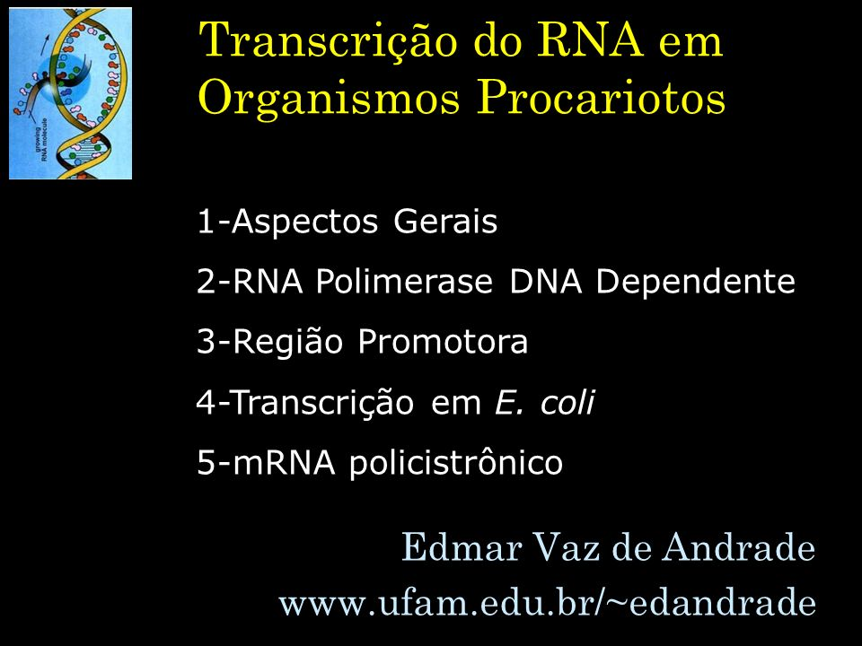 Transcrição do RNA em Organismos Procariotos