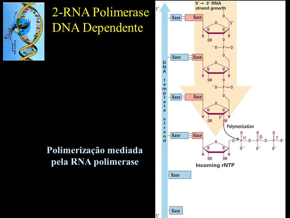 Polimerização mediada pela RNA polimerase