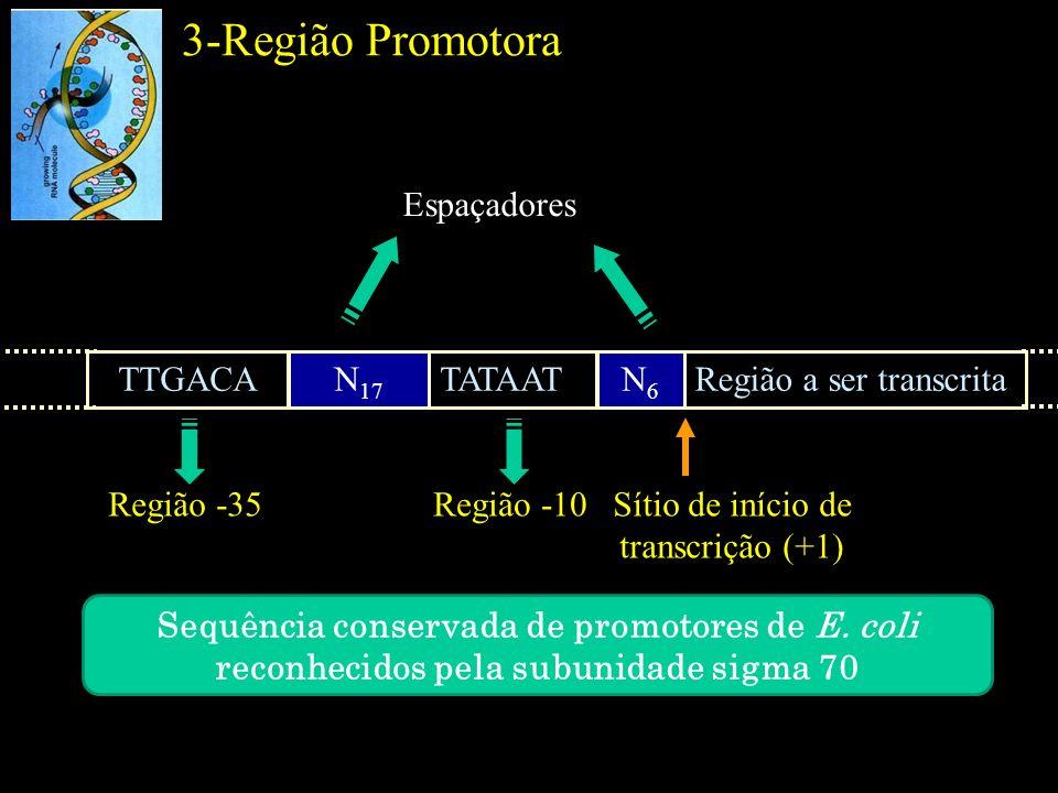 Sítio de início de transcrição (+1)
