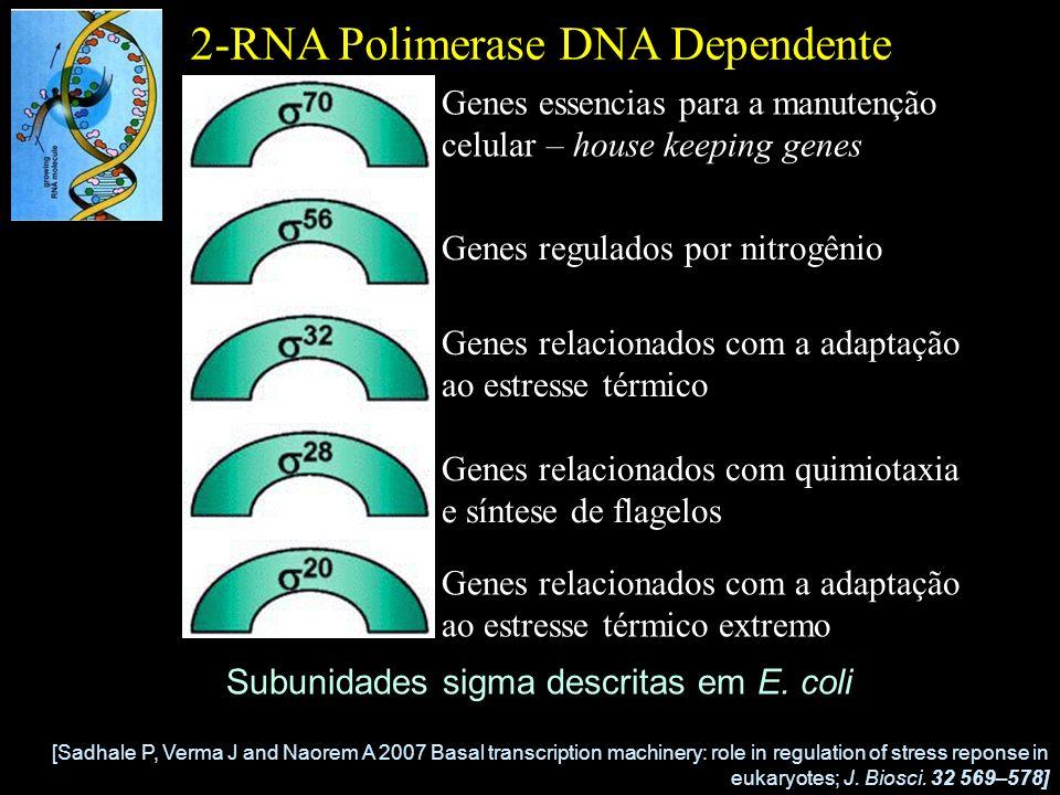 2-RNA Polimerase DNA Dependente