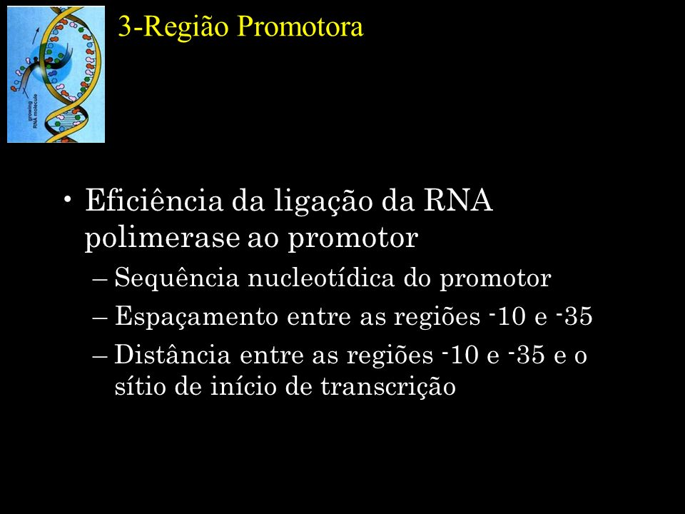 Eficiência da ligação da RNA polimerase ao promotor