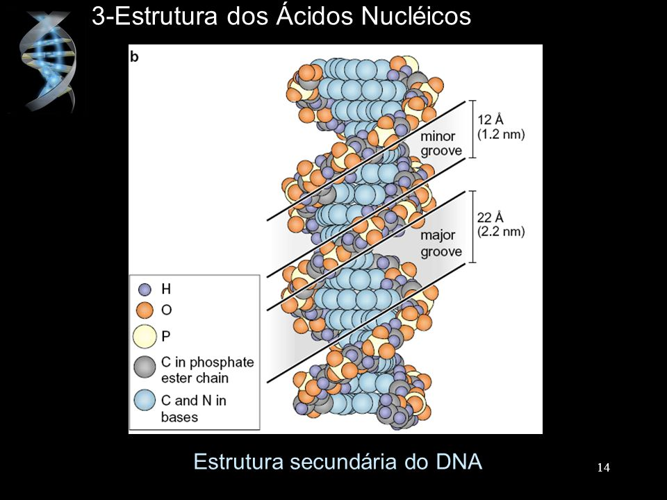 3-Estrutura dos Ácidos Nucléicos
