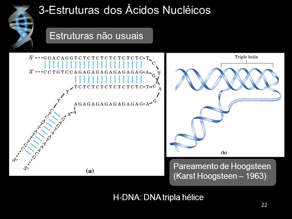 H-DNA: DNA tripla hélice
