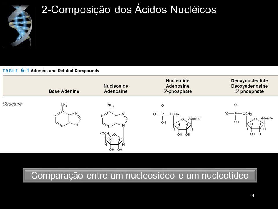 Comparação entre um nucleosídeo e um nucleotídeo