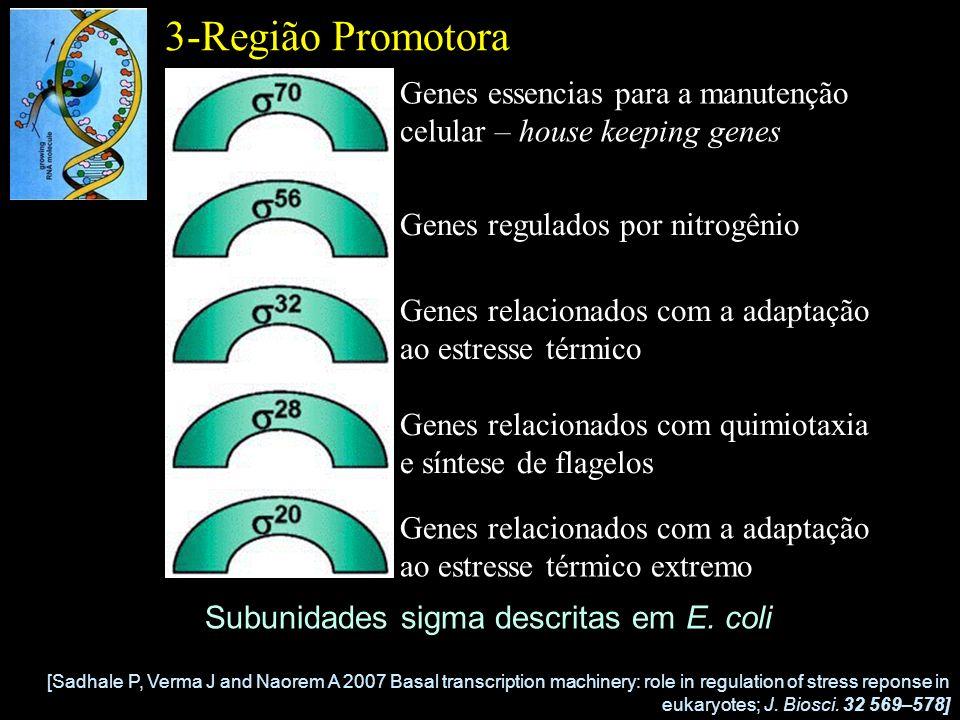 3-Região Promotora Genes essencias para a manutenção celular – house keeping genes. Genes regulados por nitrogênio.