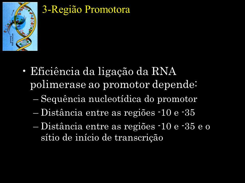 Eficiência da ligação da RNA polimerase ao promotor depende:
