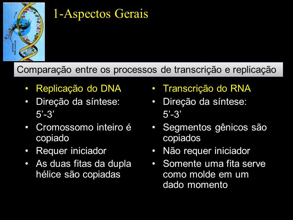 1-Aspectos Gerais Comparação entre os processos de transcrição e replicação. Replicação do DNA. Direção da síntese: